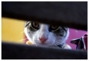 Peeking Kitty by JacquiJax