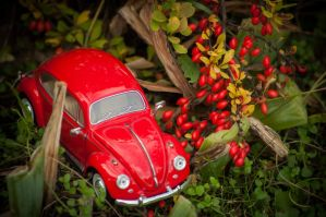 My little Beetle4 by NRichey