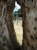 Hole in a Tree by JacquiJax-Stock
