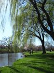 Whispering Willows by GummySchmeeSquee