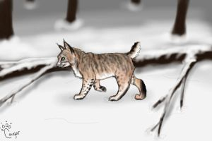 Bobcat by Cougar28