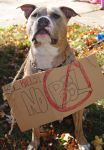 Ace Says NO BSL by Addict9870