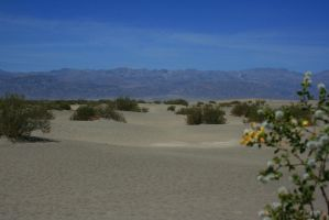 Sand Dunes in Stovepipe Wells by Dr-J-Zoidberg