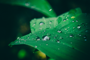 Droplets by Irkis