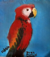 Macaw by dfjuanma15