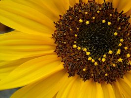 Sunflower yellow by Lux1311