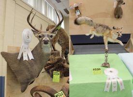 2015 Ribbons by WeirdCityTaxidermy