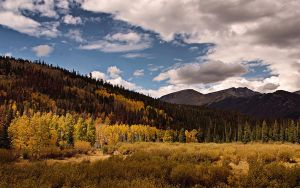spotlight on aspens by ariseandrejoice