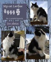 My cat Lurifax, pack 01 by LunaNYXstock