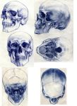 6 views skull by tobiee