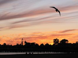 Santa Cruz sunset with seagull by findmeaname