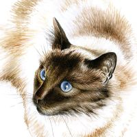 Commission: Teazle, the cat by Heliocyan