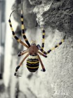 Who likes spiders? by ad-shor