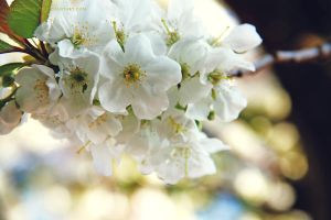 Lente by illusionality