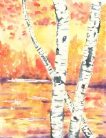 Fall Birches by K-Roks-G