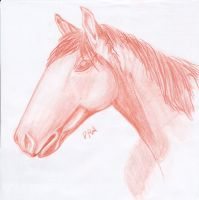 Horse study by Lemures87