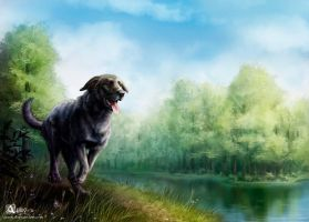 Black Lab by Azany