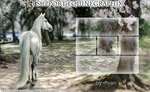 Pre-made Layout for Howrse - Support EquineGraphix by Cantatus-Promise