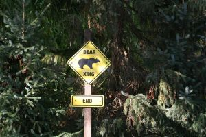 Bear Xing by Pattarchus