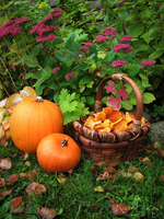 A basket full of autumn by RavenMontoya