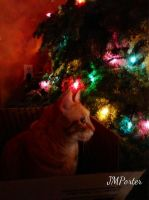 Miss Crookshanks in the Glow of the Tree by JMPorter
