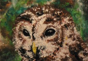 Tawny Owl by Crateris