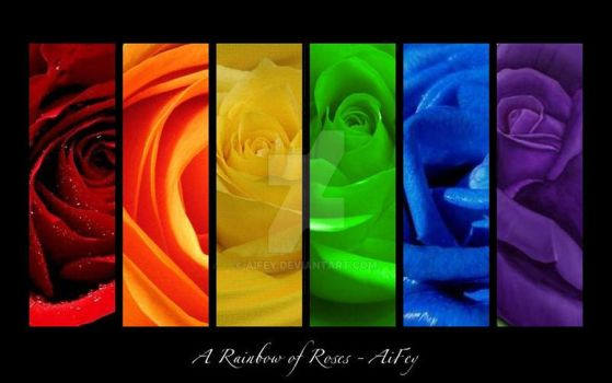 Rainbow of Roses by AiFey