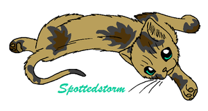 Gift - Spottedstorm by WildpathOfShadowClan