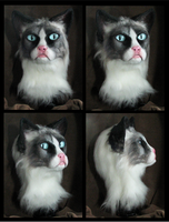 Grumpy Cat Partial by Eddie-Ka