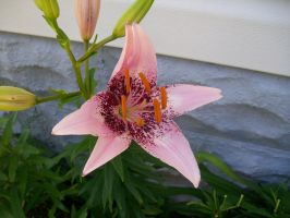 Pink Flower by WoodenOx