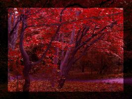 Forest 3 red. by nakasha