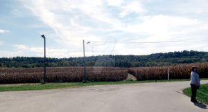 Why Yes We DO Have Corn in Indiana by SpellboundFox
