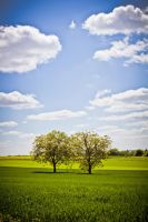 2012-05-13_009 by rootscratch