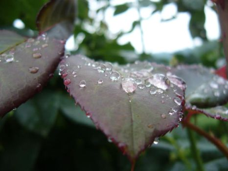 Droplets...vol3 by Wendy018GD