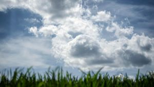 Grass and Sky by daenuprobst