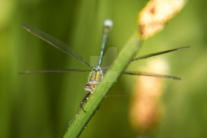 Damselfly - x wing by CryogenicCactus