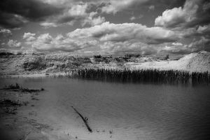 monochrome swamp by pinyty