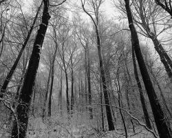 Winter Forest by world-of-wiz