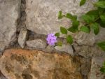 Stone wall with flower by Delice1941