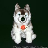 Husky plush by Teddy Hermann of Germany by dapumakat