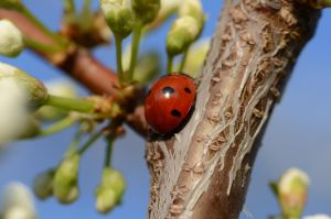 Stock: Ladybird back by Think-Outside-Of-Box