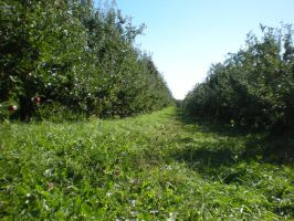 Orchards by HiddenWithinMyself