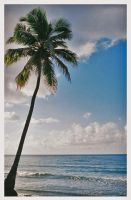 Palm Tree by throughherlens