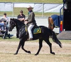 STOCK - Gold Coast show 131 by fillyrox