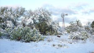Snow in Southern Arizona 3 by JZLobo