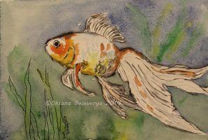 Watercolor and Ink #11 - Goldfish by Oksana007
