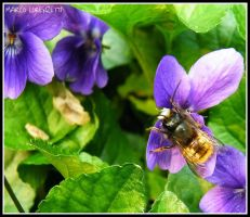PIT STOP FOR BEES by MarcoLorenzetti