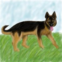 German Shepherd by PeRfEcT186