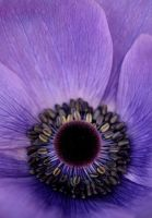 Anenome IV by Gothic-Dreamscapes