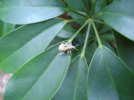Weevil On Leaves by thehurricanes